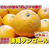 【清見タンゴール】お買い得5kgセット(大中小サイズ混合)愛媛県産フォーシーズン