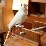 プエブコ PUEBCO バードオフジェ ARTIFICIAL BIRDS セキセイインコ Budgie ホワイト 126074