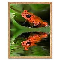 Frog Orange Amazon Art Print Framed Poster Wall Decor 12X16 Inch オレンジポスター壁デコ