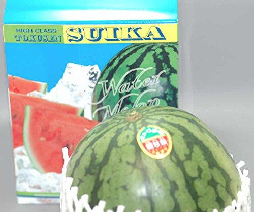 小玉スイカ 特選 1玉1.5〜2kg前後 化粧箱入
