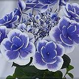 ドリップブルー さかもと園芸 達人のあじさい 母の日 あじさい アジサイ 紫陽花 花鉢植え 花 ギフト プレゼント 贈答品 エンゲイタツジンハハヒアジサイハナハチウハナゾウトウヒン (ドリップブルー)