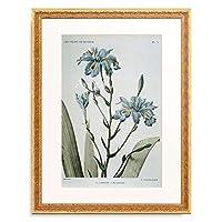 ピエール=ジョゼフ・ルドゥーテ Pierre Joseph Redoute 「Iris / (Iris fimbriata)」 額装アート作品