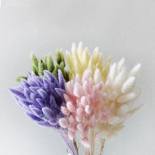 【Blooming&me】フラワーデザイナーおすすめ! ドライフラワー マシュマロ パステル ハニーテール 20g【選べるカラー全2色】 (ホワイト) [並行輸入品]
