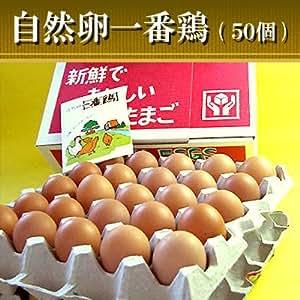 水郷のとりやさん 平飼いの鶏卵 放し飼い自然卵 『一番鶏』 50個詰 (40個+破損保障分10個)[香取市小見川の地卵 有精卵]【冷蔵限定 冷凍商品と同梱不可】