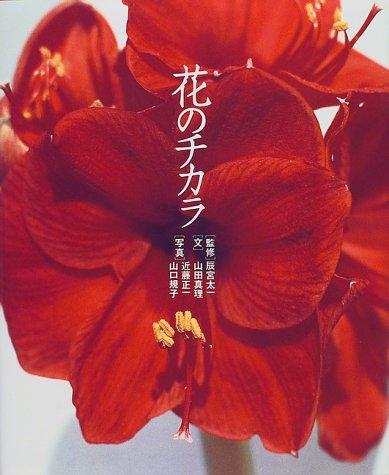 花のチカラ