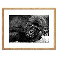Gorilla Ape Black White Portrait Art Picture Framed Wall Art Print ポートレート画像壁