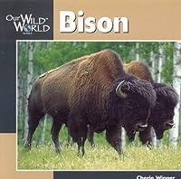 Bison (Our Wild World)