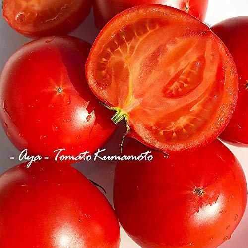 【熊本県産】高級 高糖度 塩トマト 綾 特別なトマト (箱込 約2kg前後)
