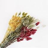 【Blooming&me】フラワーデザイナーおすすめ! ドライフラワー ポアプランツ 25g 【選べるカラー全8色】 (イエロー)