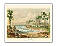 パルミラのヤシの木(トディの手のひら) - スリランカ(セイロン) - ビンテージな植物のイラスト によって作成された エルンスト・ヘイン c.1889 - アートポスター - 41cm x 51cm