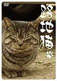 路地猫[DVD]