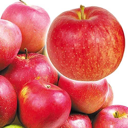 国華園 青森産 新物おまかせちび【赤りんご】 10�s1箱 りんご
