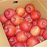 山形産 サンふじ りんご 5kg 約12?20玉前後 訳あり ご家庭用
