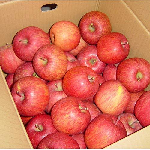 山形産 サンふじ りんご 5kg 約12~20玉前後 訳あり ご家庭用