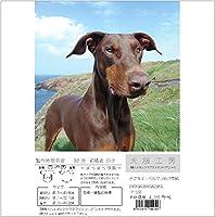犬服工房 型紙  3種ハイネックラグランスリーブTシャツ 小さなドーベルマンDB3XS~DBXS