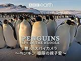 潜入!スパイカメラ ペンギン 極限の親子愛(字幕版)