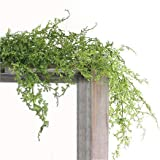 コーラルファーン ハンギングブッシュ 観葉植物 造花 ミニ インテリア 消臭 CT触媒 フェイクグリーン 人工 目隠し 壁 おしゃれ 40959