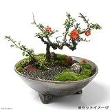 手作り山野草鉢 益子焼 足付平鉢 炭化 鉢底穴あり 直径25cm 植木鉢 山野草 盆栽鉢