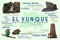 プエルトリコ–Typography andアイコン–EL YUNQUE National Forest 12 x 18 Art Print LANT-75432-12x18