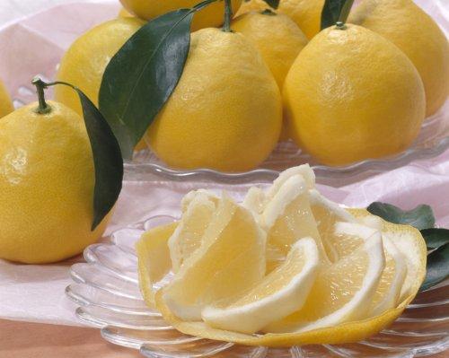 【訳あり】 無農薬 熊本産 ニューサマーオレンジ 約5kg 30〜40玉入 サイズ混合