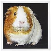 Guinea Pig–Guinea Pig–グリーティングカード Set of 12 Greeting Cards