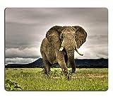 MSDマウスパッド天然ゴムマウスパッドイメージのアフリカ象動物サファリNature Big WildlifeワイルドMammal African Large公園トランクNational Dangerous