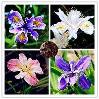 ミックス:20個希少アイリス、アイリス種子、盆栽の花の種、24色、家宝アイリスTectorum多年生の花の種、家庭菜園のための植物
