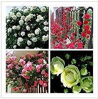 600ピース中国赤ピンクグリーンホワイトローズ種子各色盆栽植物ホーム&アンプの種子;庭49%