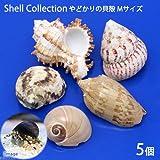 (海水魚 貝殻)やどかりの貝殻 Mサイズ おまかせ(殻口20~30mm)(5個入り)(形状おまかせ) 本州・四国限定[生体]