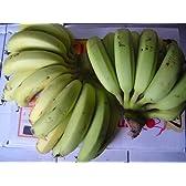 島バナナ(3キロ入り)
