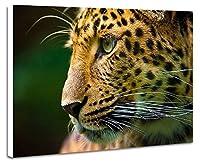 ヒョウの顔 動物の写真 壁掛け式の装飾画 印刷の絵 ポスター(40cmx60cmx2.5cm)