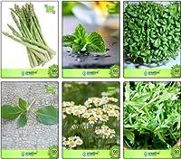 SEEDシードコンボはSEEDシード(パケットあたり1)することでアスパラガス、クレス、レモンバジル、ドイツChamoe、種子コンボパックパック