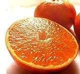 はまさき 麗紅 佐賀県産 約5kg M〜4Lサイズ 秀品 産地箱入り JAからつ 柑橘類 佐賀県渾身のタンゴール 実測糖度14度!