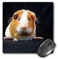 3drose LLC 8x 8x 0.25インチマウスパッド、Guinea Pig ( MP _ 1062_ 1)
