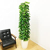ポトス タワー仕立て 観葉植物 10号 大鉢 観葉植物 インテリア 大型 オシャレ 大きい 尺鉢 タワー 大サイズ 本物