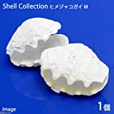 (海水魚 貝殻)シェルコレクション ヒメシャコガイ(かざりシャコガイ) おまかせカラー Mサイズ(1組)(形状お任せ) 本州・四国限定[生体]