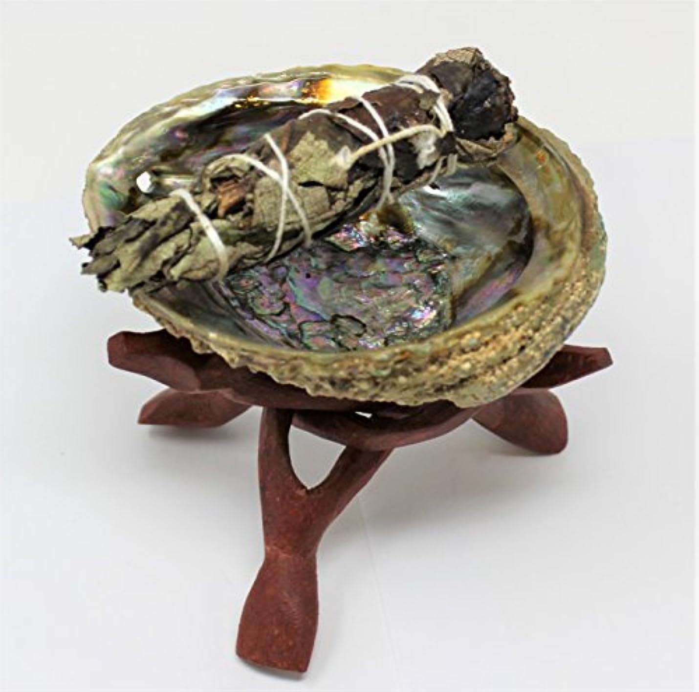 軍艦手配する盆地Abalone Shell , 6