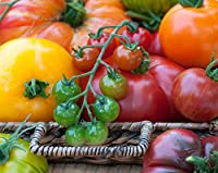 Tomato Fantasy - Set no. 1 - Seeds of 8 Varieties - 8 Seed Packets