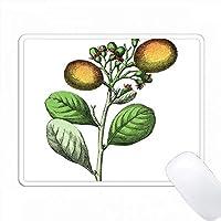 ドイツの植物帳から梅の植物の印刷 PC Mouse Pad パソコン マウスパッド