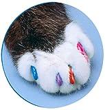 AIAM ソフトクロー スターターキット 子猫用の画像