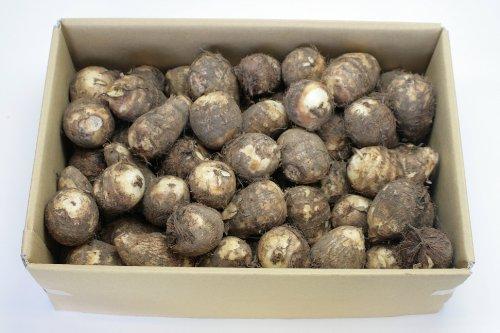 週末セール いも 山形県庄内 土付き里芋 M・L(中)サイズ 5kg M・Lサイズ ※品種:大和、どだれ
