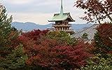 紅葉 高台寺-圓徳院