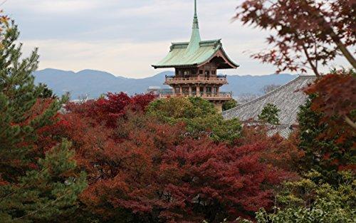 紅葉 高台寺-圓徳院の詳細を見る