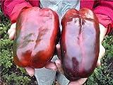 種子ピーマンKrasnyy Velikan - レッドジャイアントロシア家宝NON-GMO