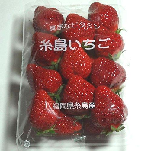 いちご(とよのか、さがほのか、紅ほっぺ、ゆうべに他)1パック。福岡産 熊本産