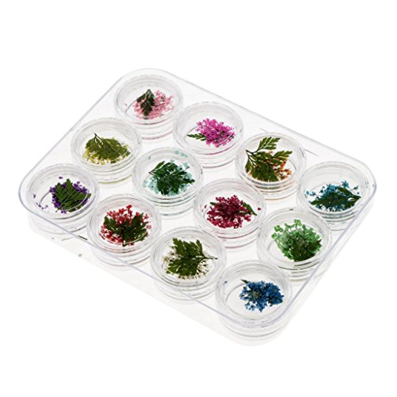 鳴らす定常かどうかPerfeclan 押し花 ドライフラワー ネイルアート ネイル用装飾 3Dネイル 全4種 - #3