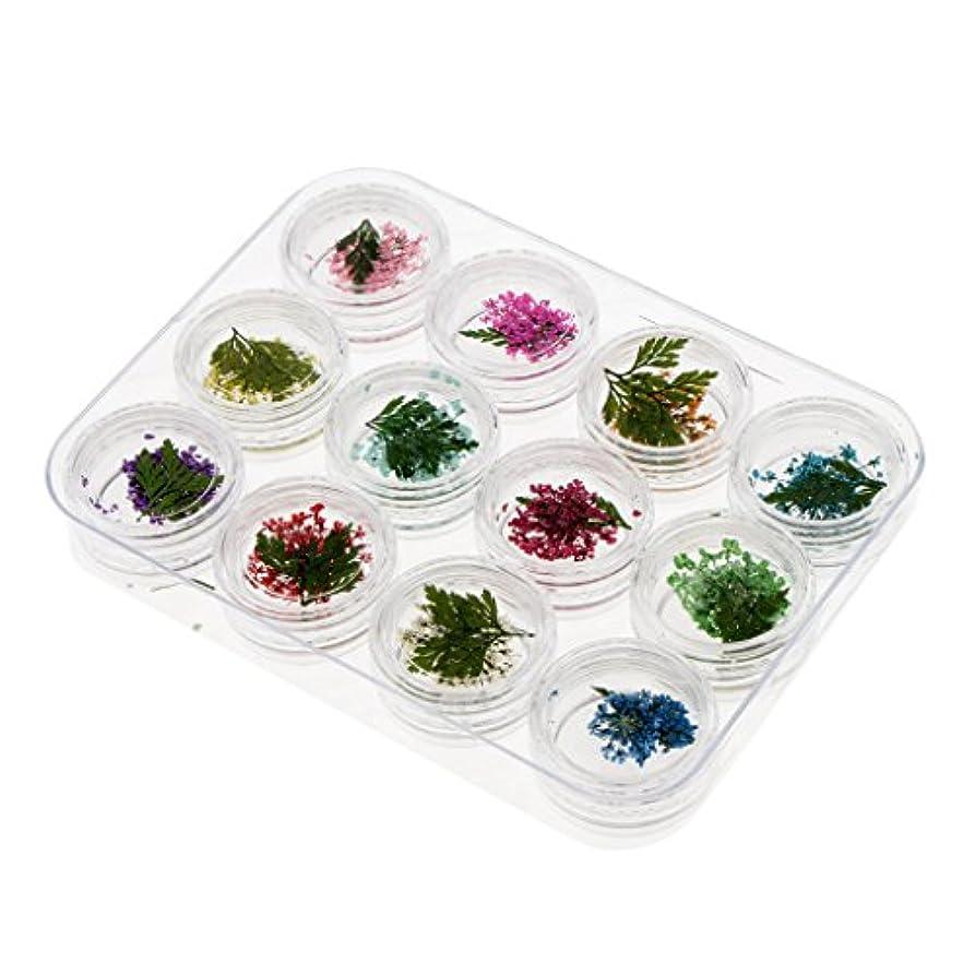 巨大媒染剤入植者ネイルアート ネイル パーツ 押し花 ドライフラワー クローバー葉 ジェルネイル 3Dネイル デコレーション 4タイプ選択 - #3