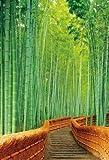 300ピース 嵯峨野の竹林(26x38cm)