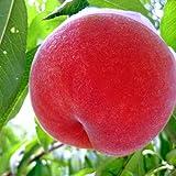 福島県産 桃 4.5kg 特秀品 糖度12度の検査済み お中元 フルーツ ギフト