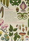 Botanicum 画像